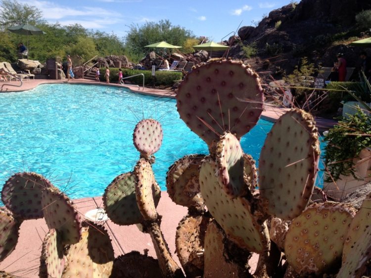 The pool at Phoenix Marriott Tempe at Buttes (Taken by Shelley Kassian)